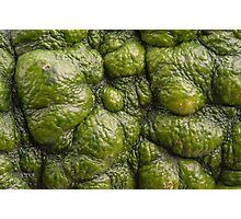 Background of green pumpkin. Photographic Print