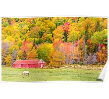 Autumn Colors Near Lake Ainslie  Poster