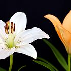 Two Lilies by Mihaela Limberea
