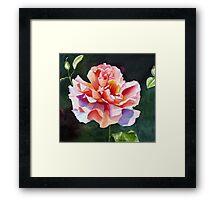 """Just Joey"" Rose Watercolor Framed Print"
