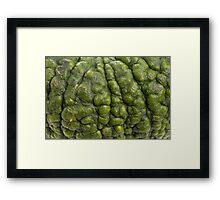 Background of green pumpkin. Framed Print