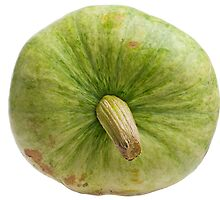 Green pumpkin isolated on white background. by fotorobs