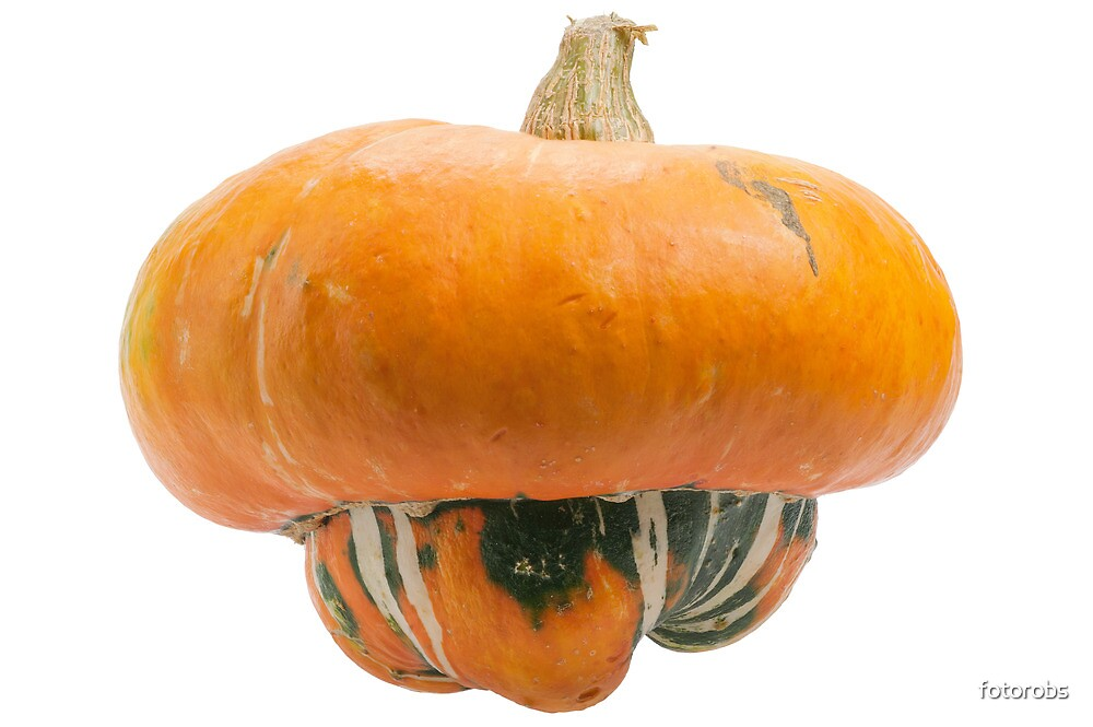 Orange pumpkin isolated on white background. by fotorobs