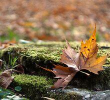 Fallen leaf by Bran