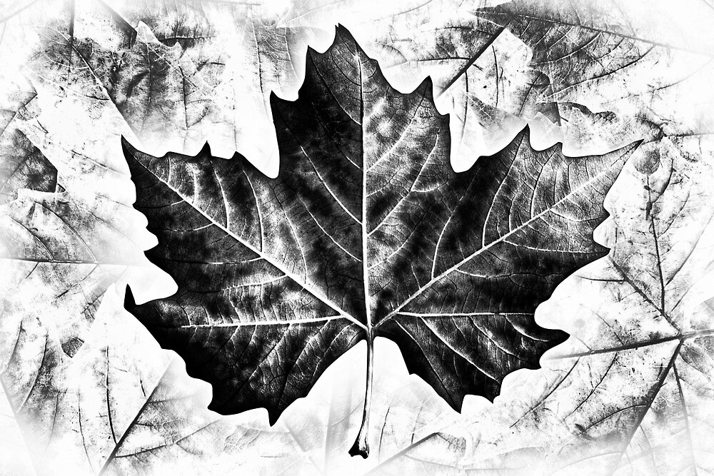 Winter Leaves by Dominic Luxton