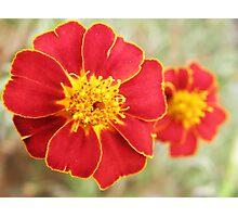 Red & Yellow Blazer Photographic Print