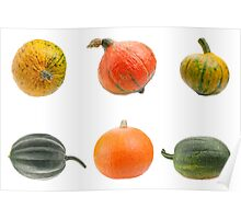 Colourful pumpkins isolated on white background. Poster