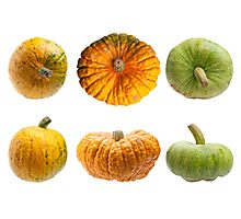 Colourful pumpkins isolated on white background. Photographic Print