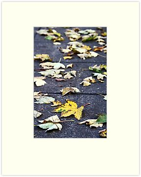 Yellow leaf, London 2010 by Jeanne Horak-Druiff