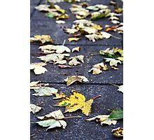 Yellow leaf, London 2010 Photographic Print