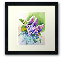 Lilacs in Lavender Framed Print