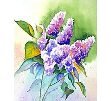 Lilacs in Lavender Photographic Print