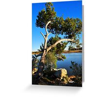 Cedar Tree On Coast Greeting Card