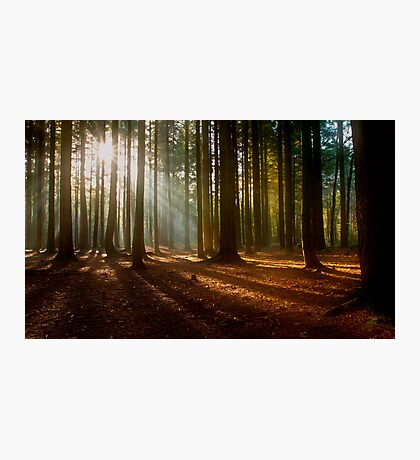 Mystery Woods Photographic Print