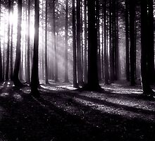 Rays of Light by Maria Selley
