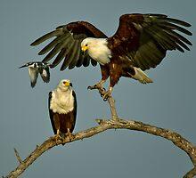 Fly-By by Rashid Latiff