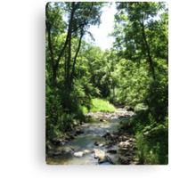 Forest Stream in Summer Canvas Print