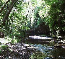 Franklin Creek in the Forest by Gu88dek