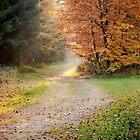 Autumn by Maciej Markiewicz