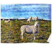 Dartmoor Sheep, Devon UK Poster