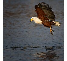 Hunting Fish Eagle Photographic Print