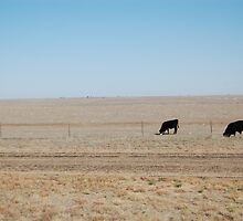 Three Cows in the Field by klieneine