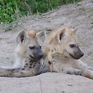 Who said baby hyena aren't cute...? by LivWildlife