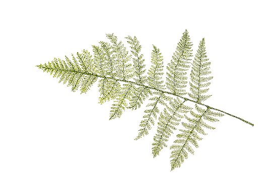 Fern by Judy Newcomb
