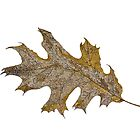 Black Oak Leaf by Judy Newcomb