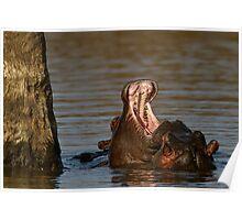 Hippo Politics Poster
