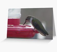 Humming bird eating Greeting Card
