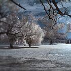 Chapel in the Moonlight by Kym Howard