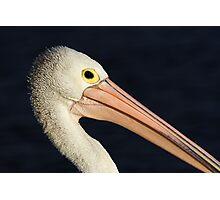 Pelican at Lakes Entrance Photographic Print