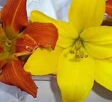 Yellow Lilium and Burnt Orange Daylily. by Maureen Dodd
