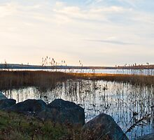Worden's Pond At Sunset - Series - NW - Southern Rhode Island by Jack McCabe
