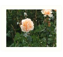 A Lovely Pale Apricot Rose Garden. Art Print