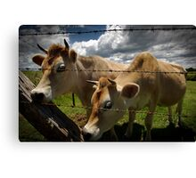 how now brown cow Canvas Print