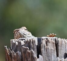 """Lizard """"unexpected hello"""" by Mel  LEE"""