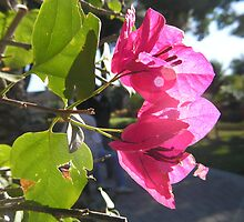 Flowers That Catch the Sun by Garrett Hanson