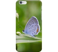 Spotted Wing iPhone Case/Skin