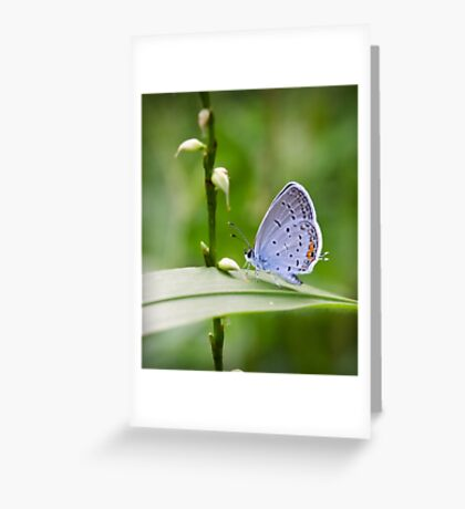 Spotted Wing Greeting Card