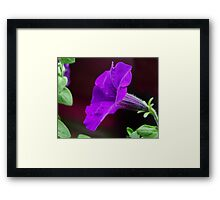 Touch of Mauve Framed Print