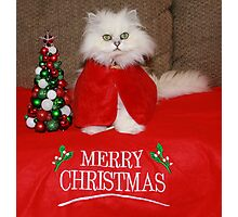 Waiting for Santa Claws Photographic Print