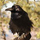 Raven by WesternArt