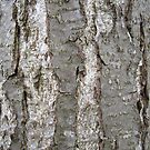 Tree Bark by Brian Roscorla