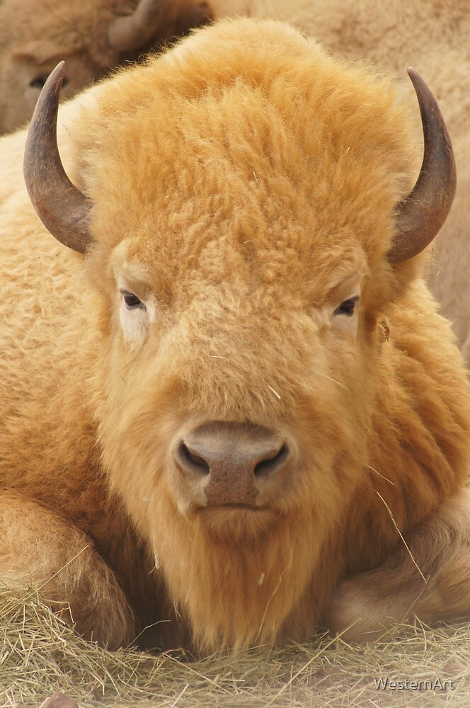 White Buffalo by WesternArt