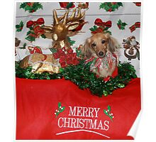 Cute dog with Reindeer Poster