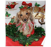 A very cute Christmas dog  Poster