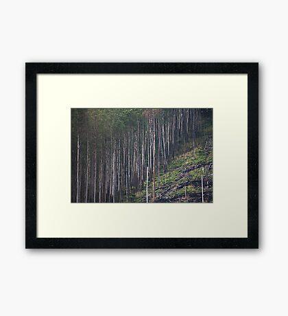 Fine Line Framed Print