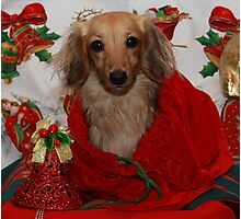 Dog in Christmas Sack Photographic Print